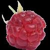 Аватар пользователя Ma-linka